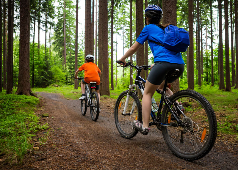 Cyclists on a trail in the woods